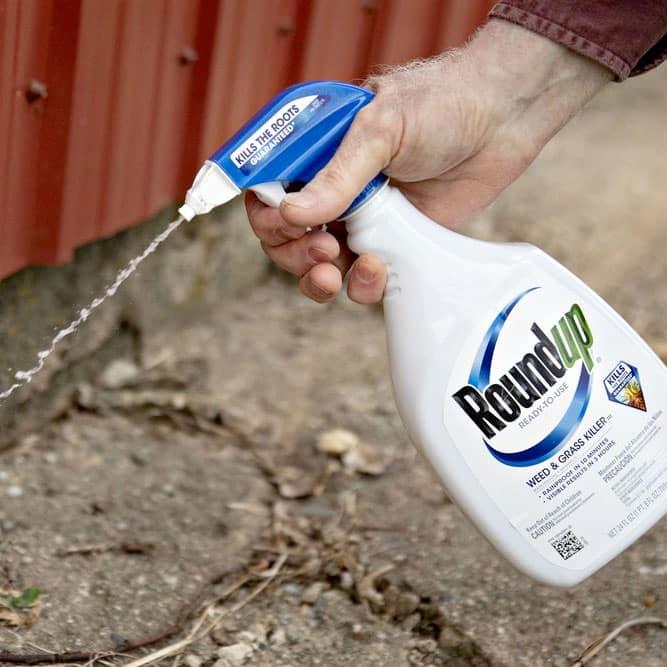 Roundup spray bottle
